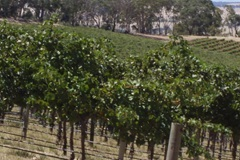 Miamba Vineyard