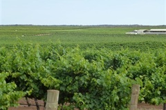 Qualco West Vineyard