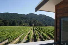 Northbank Vineyard