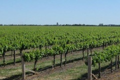 Hanwood Vineyard